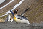 Happy penguin, image via Shutterstock