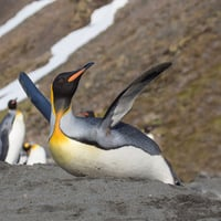 Happy penguin, image via Shutterstock