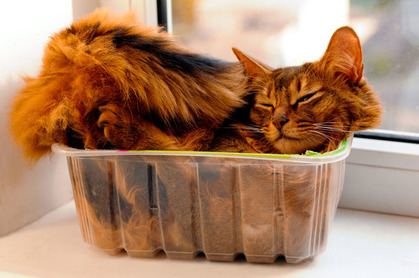 Cat in tupperware image via Shutterstock