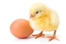 Chick egg, photo via Shutterstock