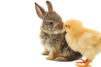 Chick and bunny Image via Shutterstock