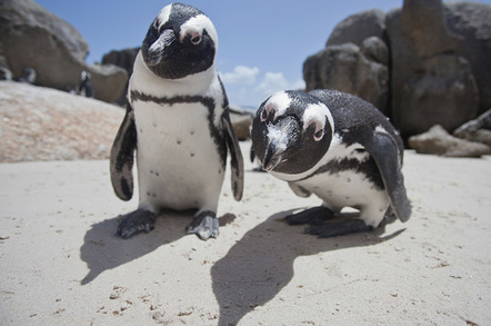 Curious penguins, image via Shutterstock