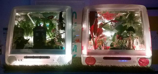 The fish tank illuminated with white light