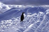 Lone penguin image via Shutterstock