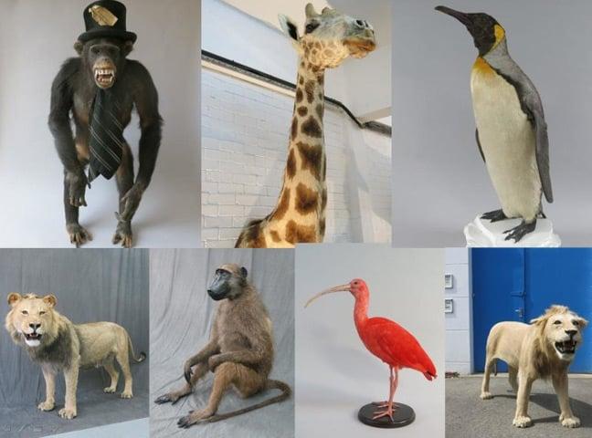 Met photo of the stolen stuffed animals