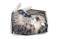 Cat in a box, image via Shutterstock