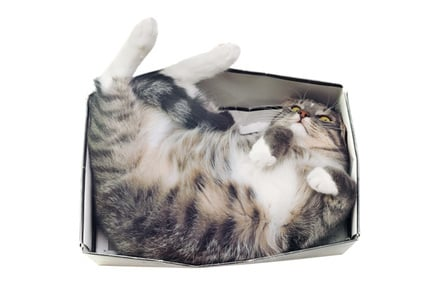 Cat in a box, image via Shutterstock