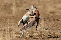 African ground squirrel, photo via Shutterstock