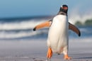 Penguin, photo via Shutterstock