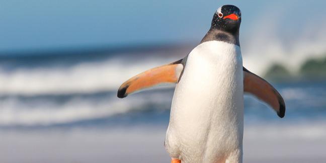 Penguin, photo via Shutterstock