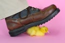 Boot crushes duckling - pic Shutterstock