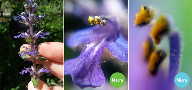 Examples of BLIPS magnification. Pic: SMO