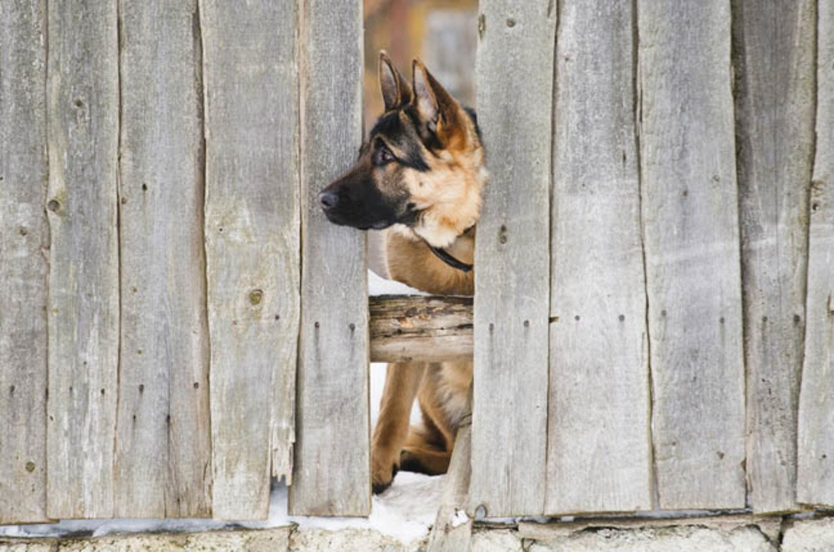 Dog_and_fence_image_via_shutterstock