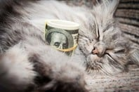 Tabby cat cuddles roll of one-hundred dollar bills. Photo by Shutterstock