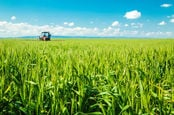 Tractor sprays wheat crops under a blue sky. Photo by Shutterstock