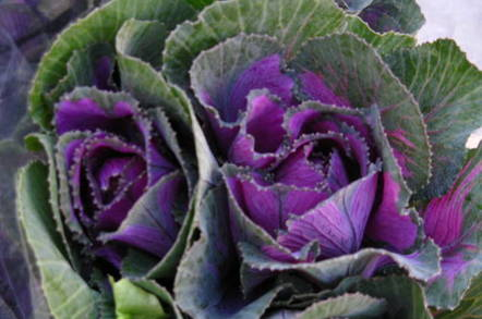 Kale by Clyde Robinson, Flickr, CC2.0 license