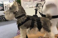 Camera mount for dogs