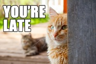 CAT TELLS OWNER THEY'RE LATE. PHOTO BY SHUTTERSTOCK