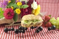Ants steal ham croissant from picnic. Photo by Shutterstock