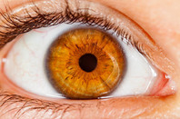 Human iris. Photo by SHutterstock
