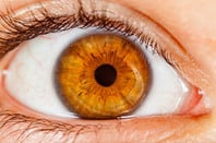 Human iris. Photo by SHutterstock