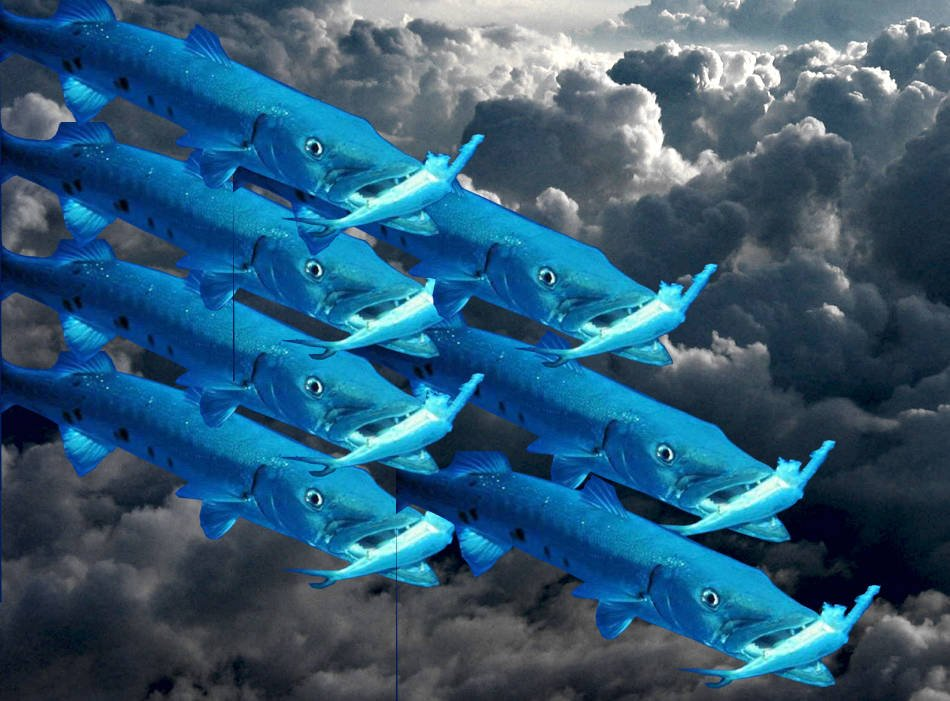 Barracuda Gobbled Up By Private Equity Sharks The Register