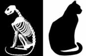 drawing of live cat and cat skeleton