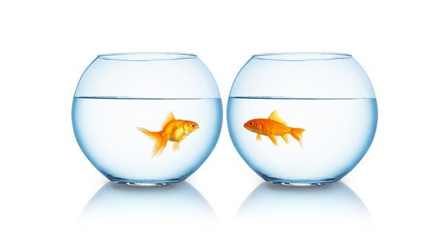 Goldfish, image via shutterstock