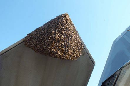 Bees infest an F-22 raptor
