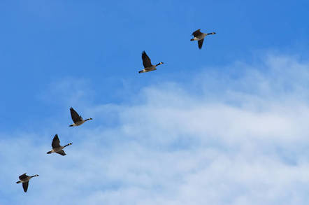 Migrating birds in the cloud