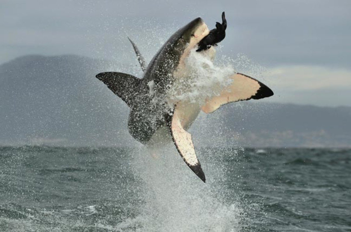 Shark Bosses Sink Teeth Into Booming Ransomware Market