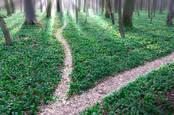 split path