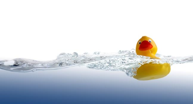Rubber duck (classic, yellow) floats on water. Photo by shutterstock
