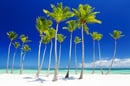 Bahamas trees photo via Shutterstock