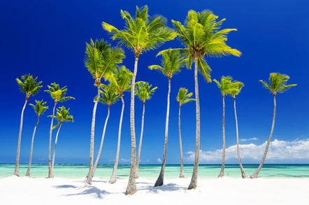 Bahamas trees photo via Shutterstock