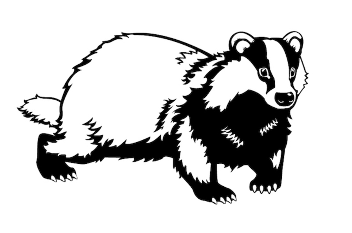 New measurement alerts! Badgers, great white sharks and