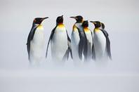 Penguins in mist, photo via Shutterstock