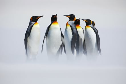 Penguins in mist, photo via Shutterstock