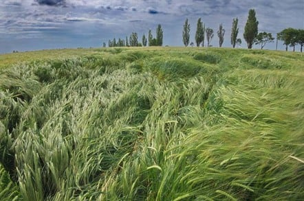 Barley in wind photo via shutterstock