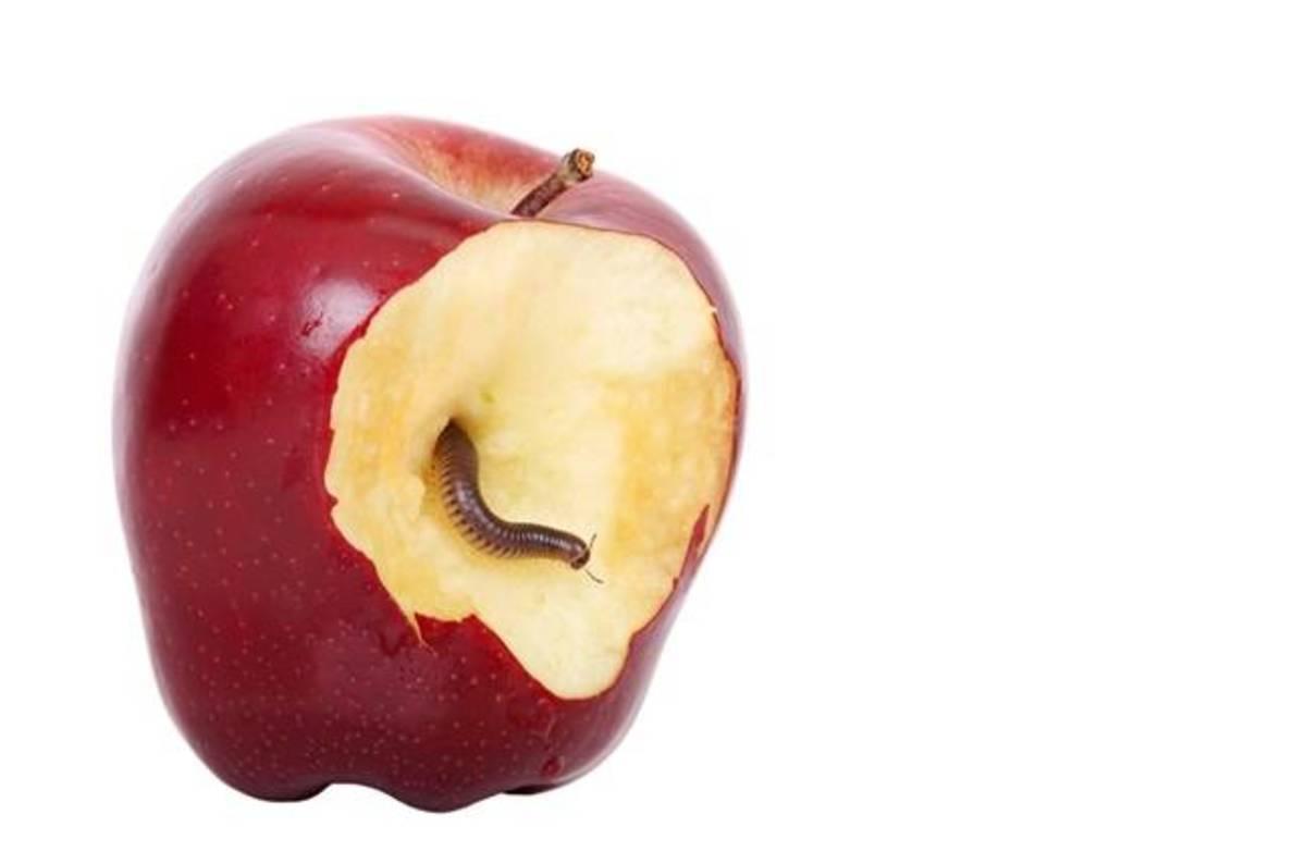 apple - photo #38