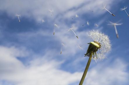 Dandelion photo by Shutterstock