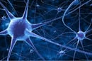 Neural network image via Shutterstock