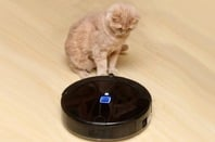 Cat stares at vacuum cleaner robot. Photo by shutterstock