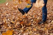 Autum leaves photo via Shutterstock