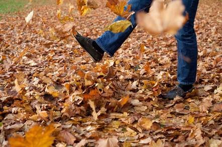 Autum leaves photo via Shutterstock