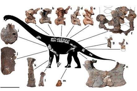 Savannasaurus elliottorum
