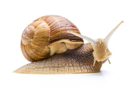 Snail on a leaf... looking surprised (yes, that's possible). Photo by SHUTTERSTOCK