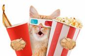shutterstock_popcorn_cat