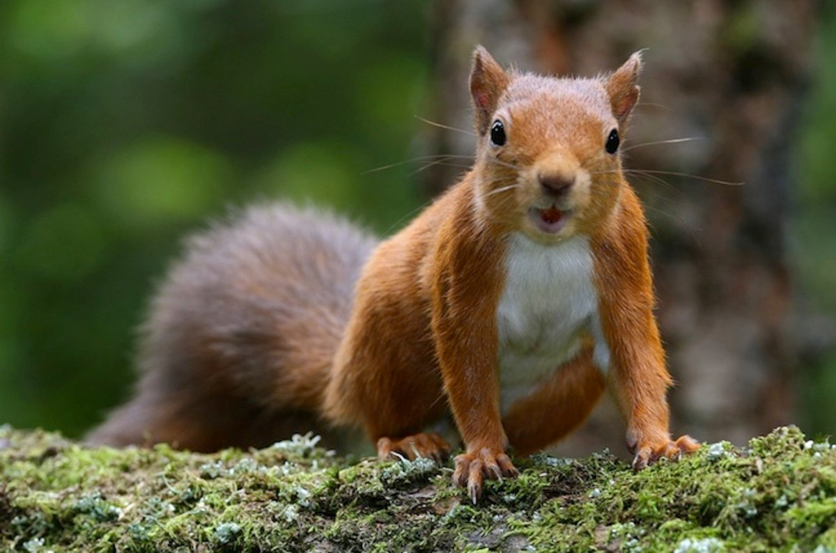Red squirrels! Adorable, right? Wrong – they're riddled with leprosy • The Register