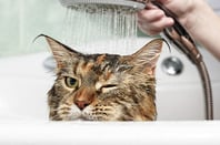 Cat in bath photo via Shutterstock